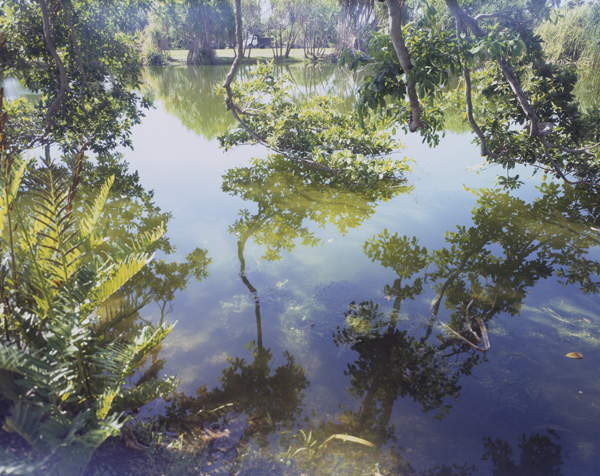Cesar Barroso - Fairchild Pond