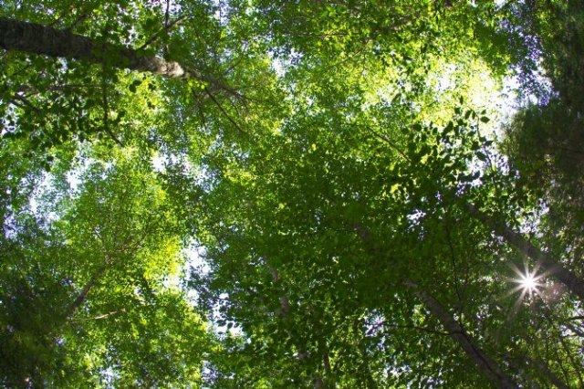 Image8-TreeCanopy