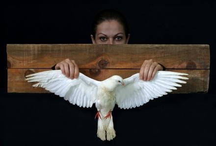 Woman  White Pigeon